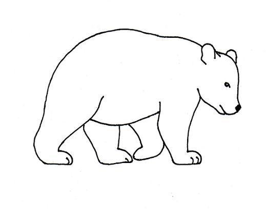 Bear Drawing Step By Samantha Bell