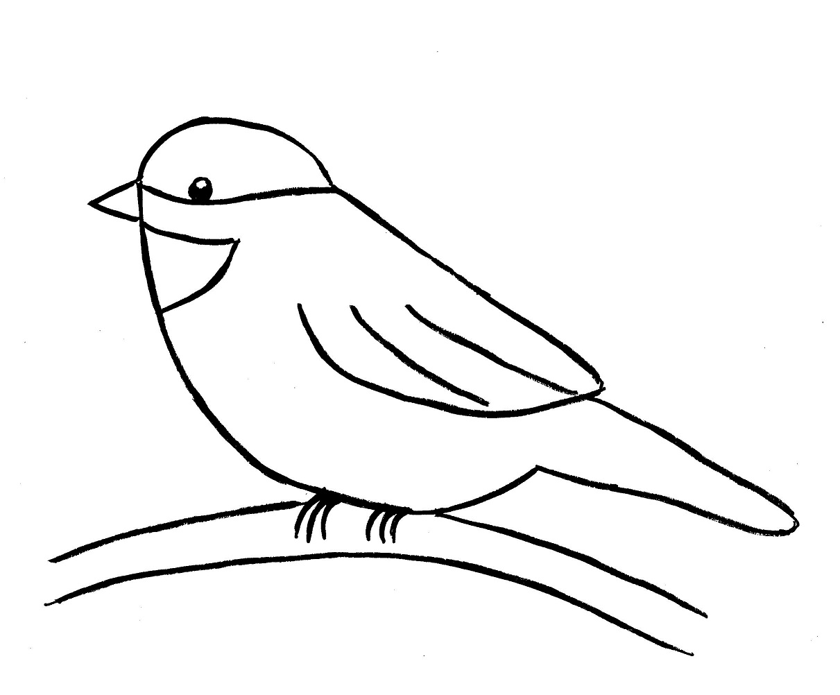 Line Drawing Of Animals And Birds : Chickadee drawing step by samantha bell