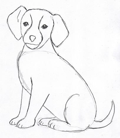 Dog Drawing Step by Step - Samantha Bell