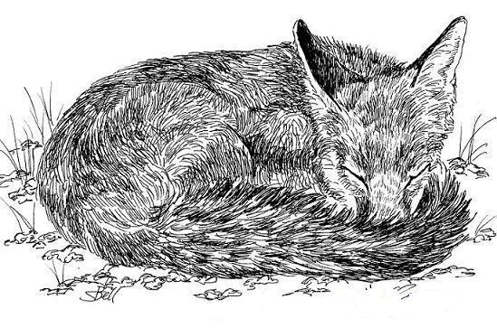 Crteži olovkom/grafika - Page 21 Fox-in-pen