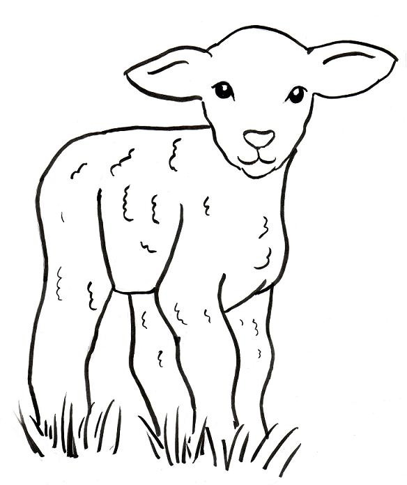 Lamb coloring page samantha bell for Lamb coloring page