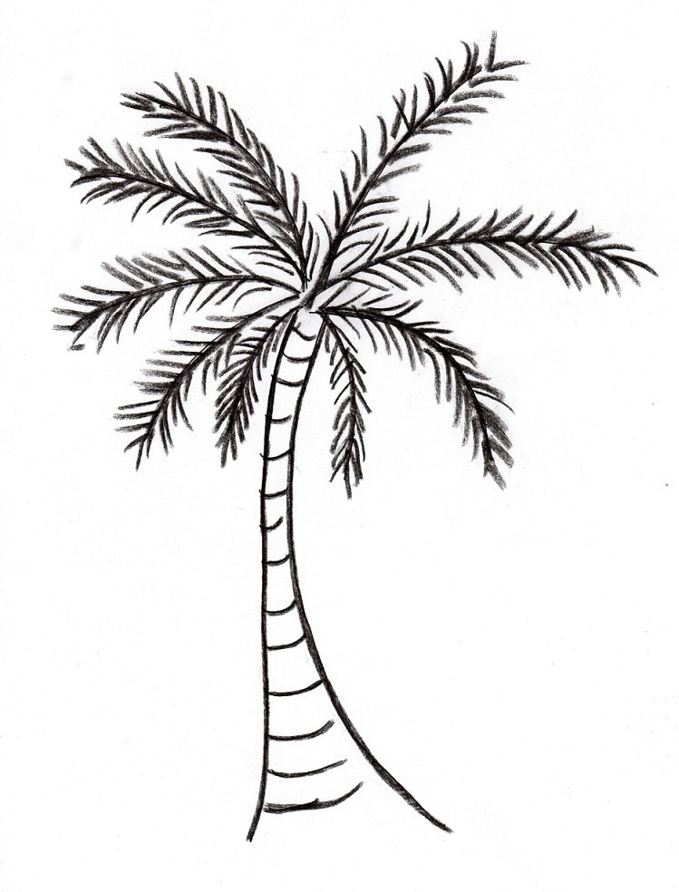 Line Drawing Palm Tree : Palm tree drawing samantha bell