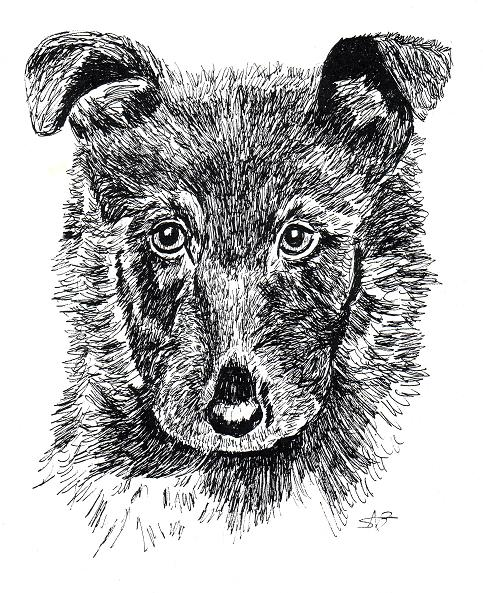 Drawing animals in pen and ink samantha bell for Ink drawings easy