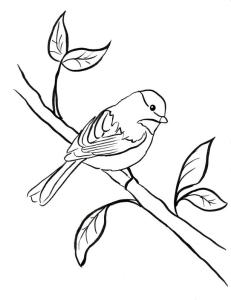 coloring-page-chickadee2