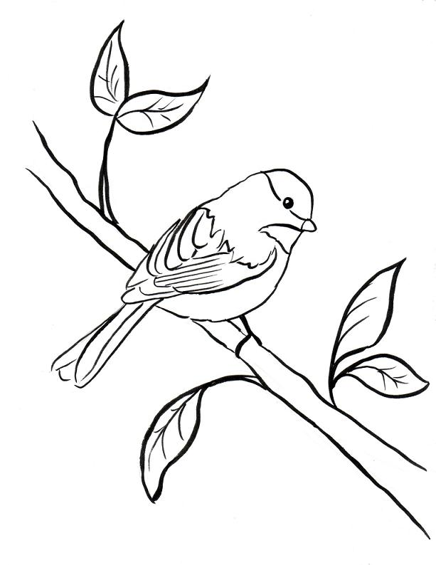 chickadee bird coloring pages - photo#7