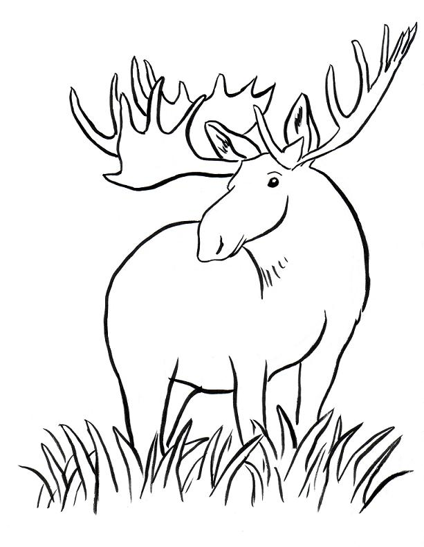 Simple elk coloring pages for Elk coloring pages