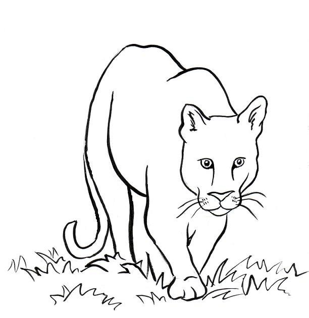 Mountain Lion Coloring Page Art