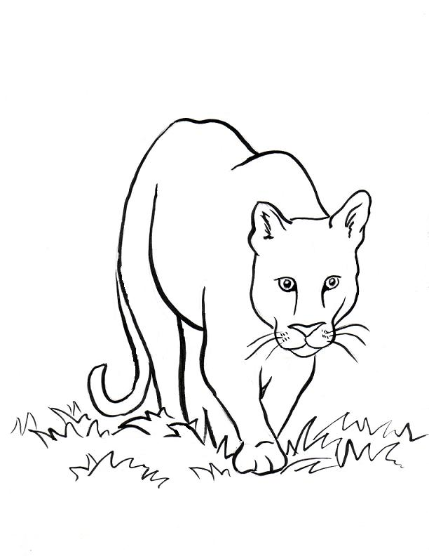 coloring page mountain lion2