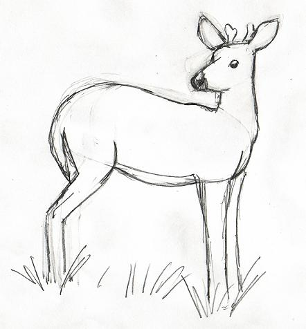 how to draw deer legs