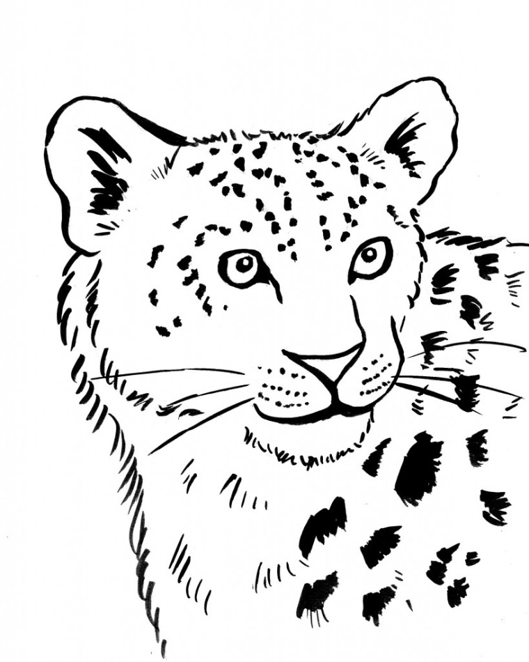 Snow Leopard Coloring Page Art
