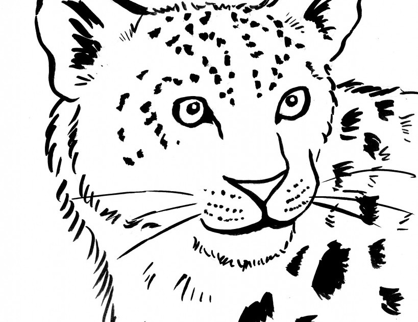 Amur Leopards Coloring Pages To Print Pictures to Pin on Pinterest