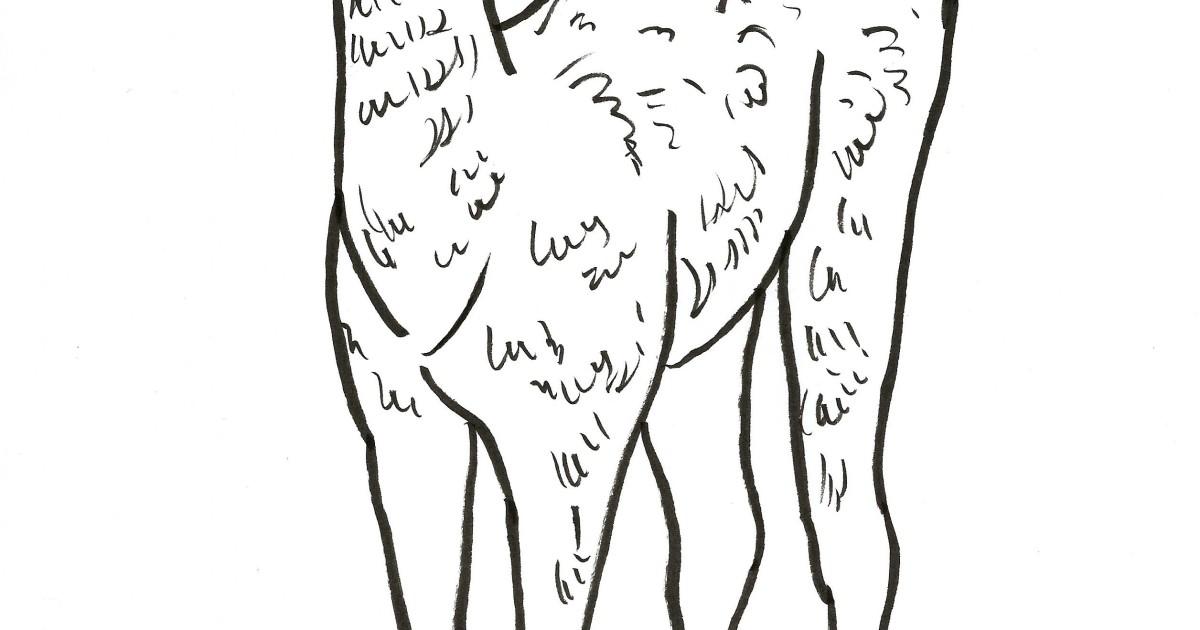 llama coloring page samantha bell