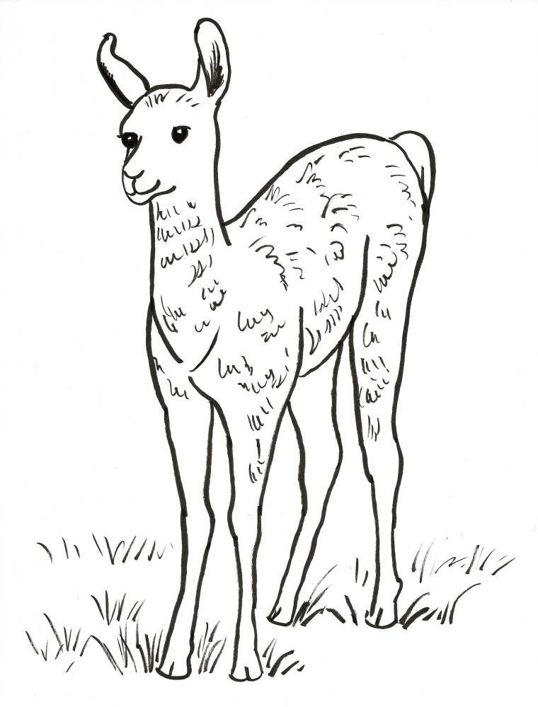 how to draw a llama face