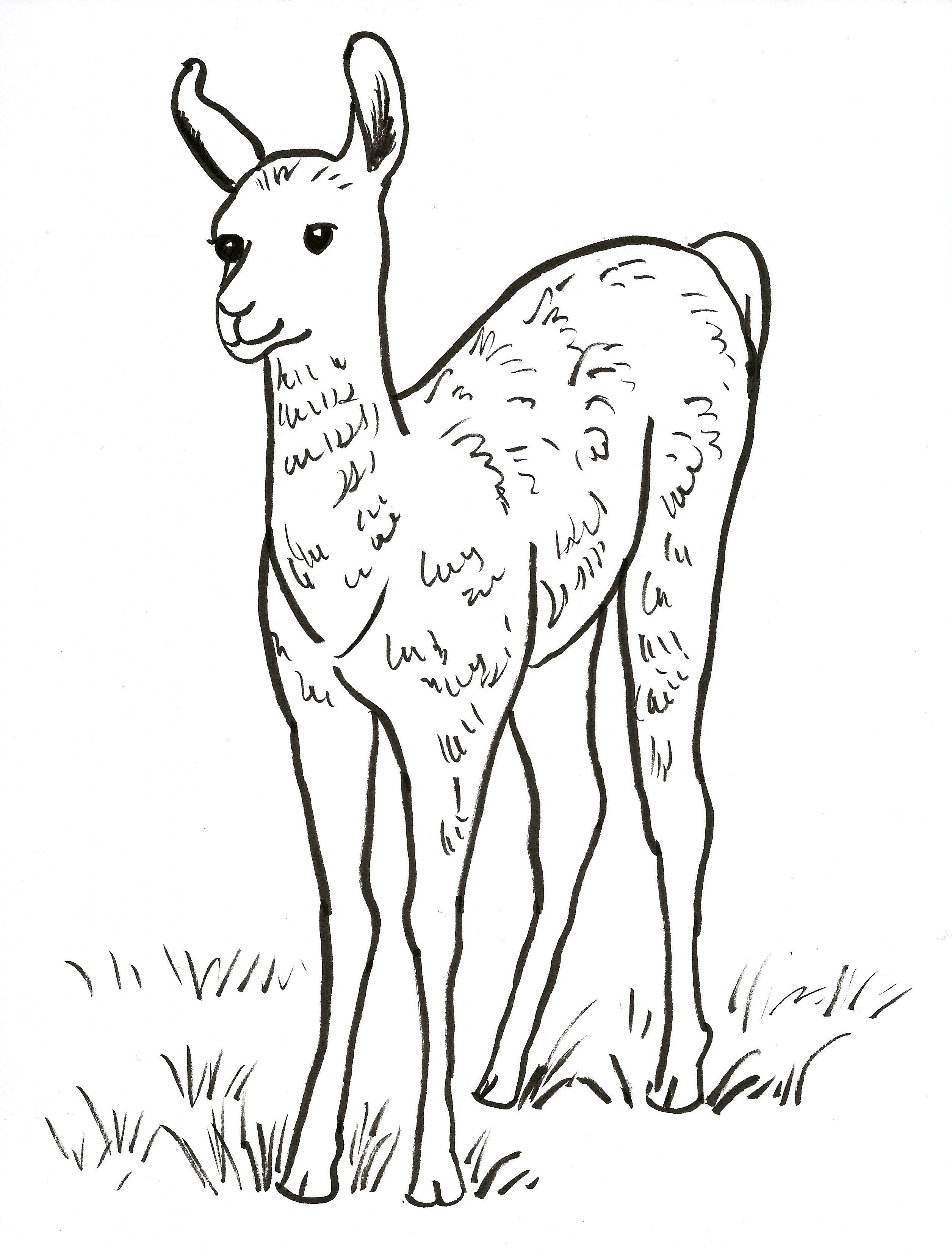 Llama Coloring Page Art Starts