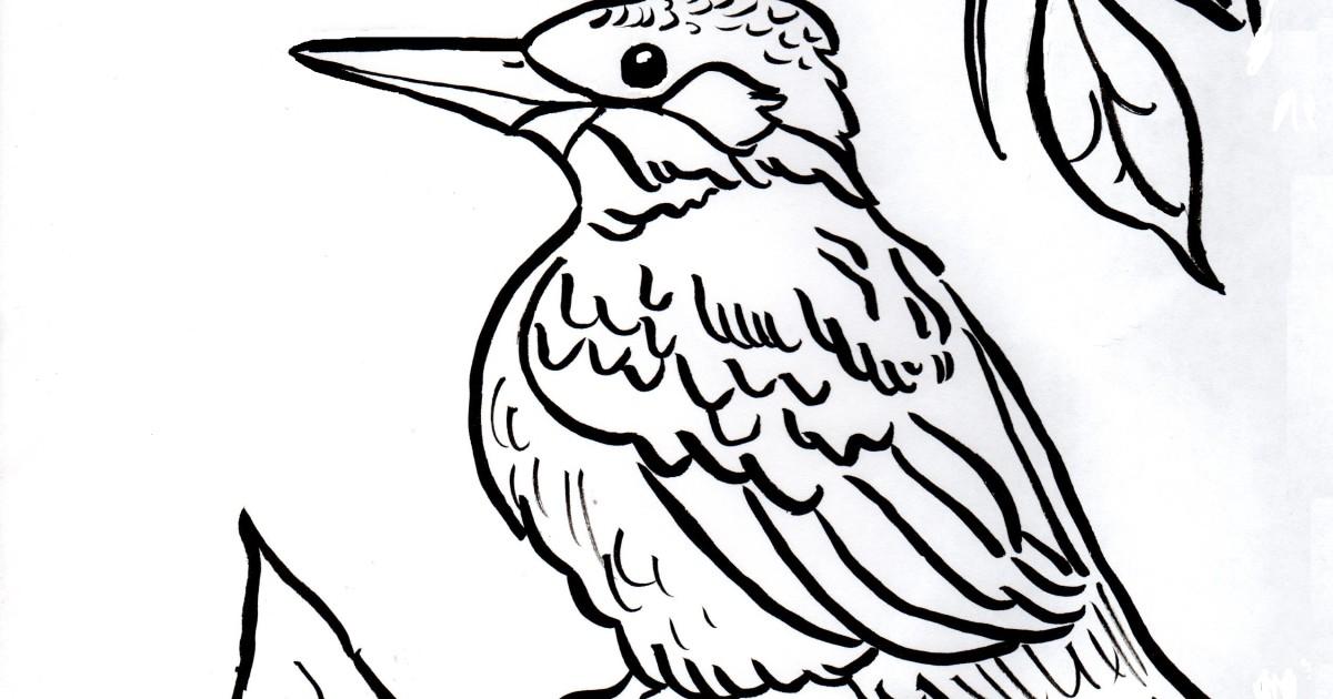 Kingfisher Coloring Page Samantha Bell