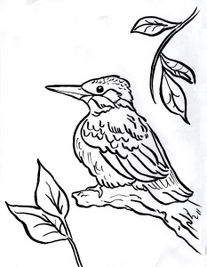 Kingfisher coloring page 2