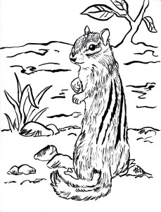 chipmunk coloring page 001