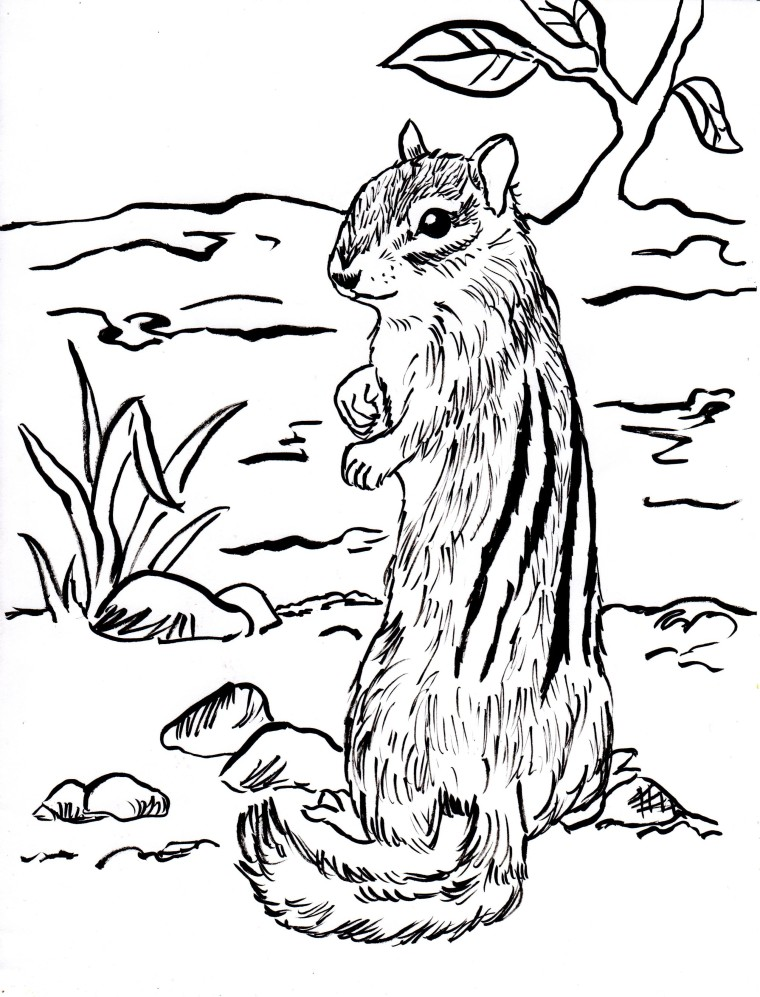 Chipmunk coloring page samantha bell for Chipmunks coloring pages