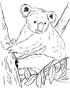 koala coloring page 002