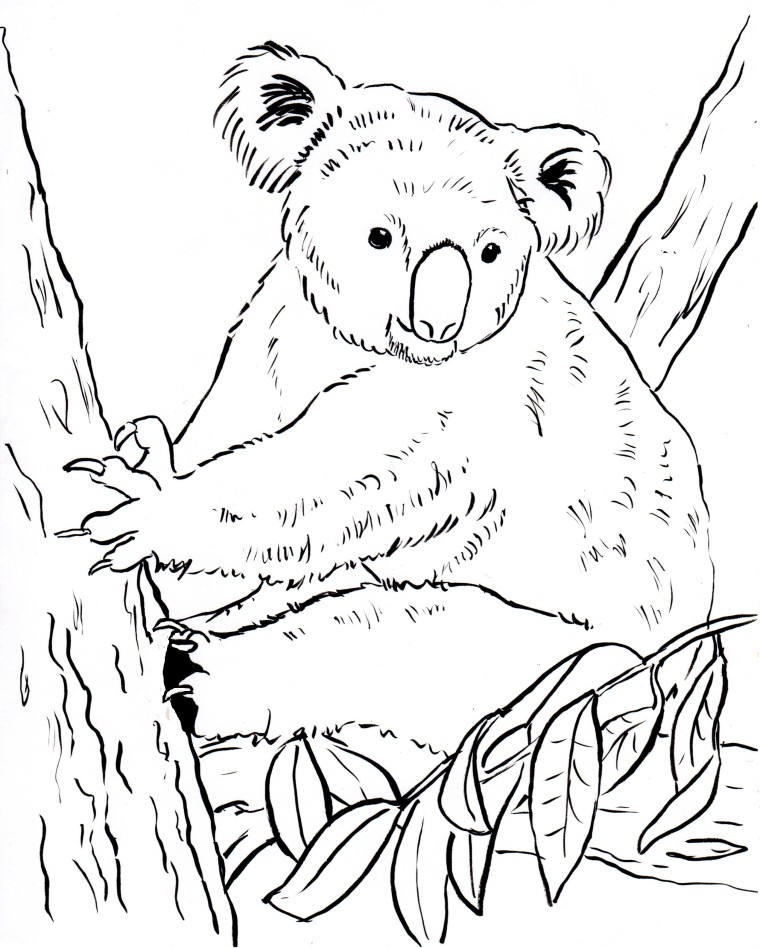 Koala Bear Coloring Page Samantha Bell - Koalas-coloring-pages