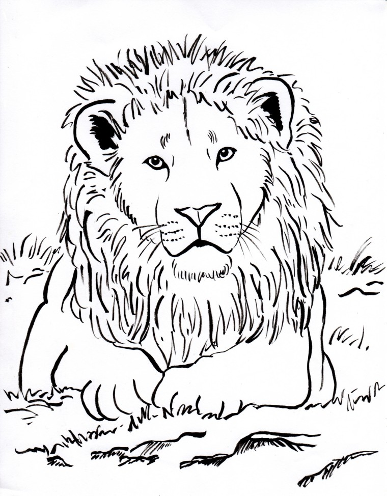 lion coloring page - Lion Coloring Pages