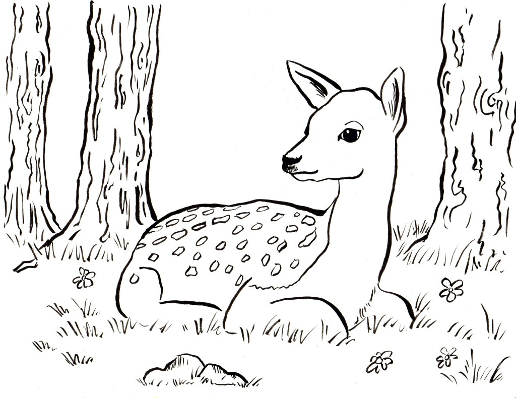 Fawn Coloring Page Art Starts for Kids