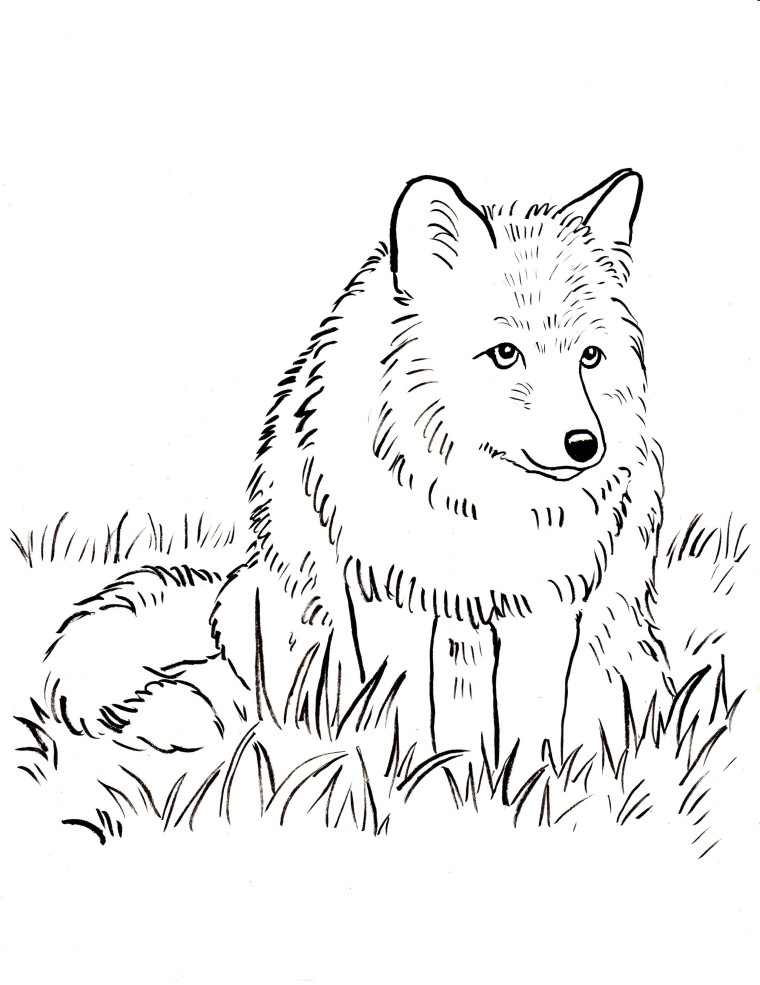 Printables archives page 6 of 9 samantha bell for Foxes coloring pages