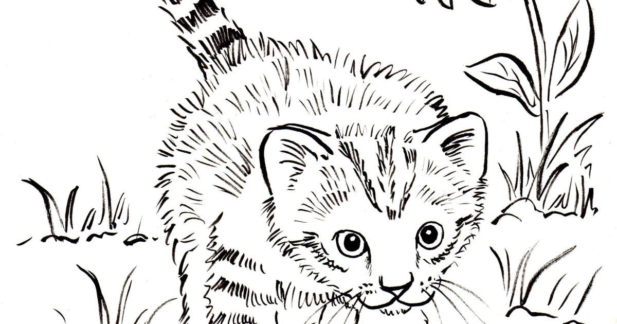 kitten coloring page samantha bell - Kitten Coloring Page