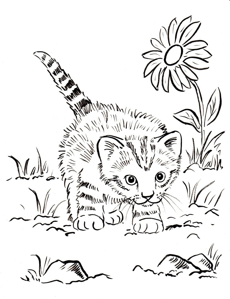 ... new coloring pages this week. The first one: a kitten coloring page