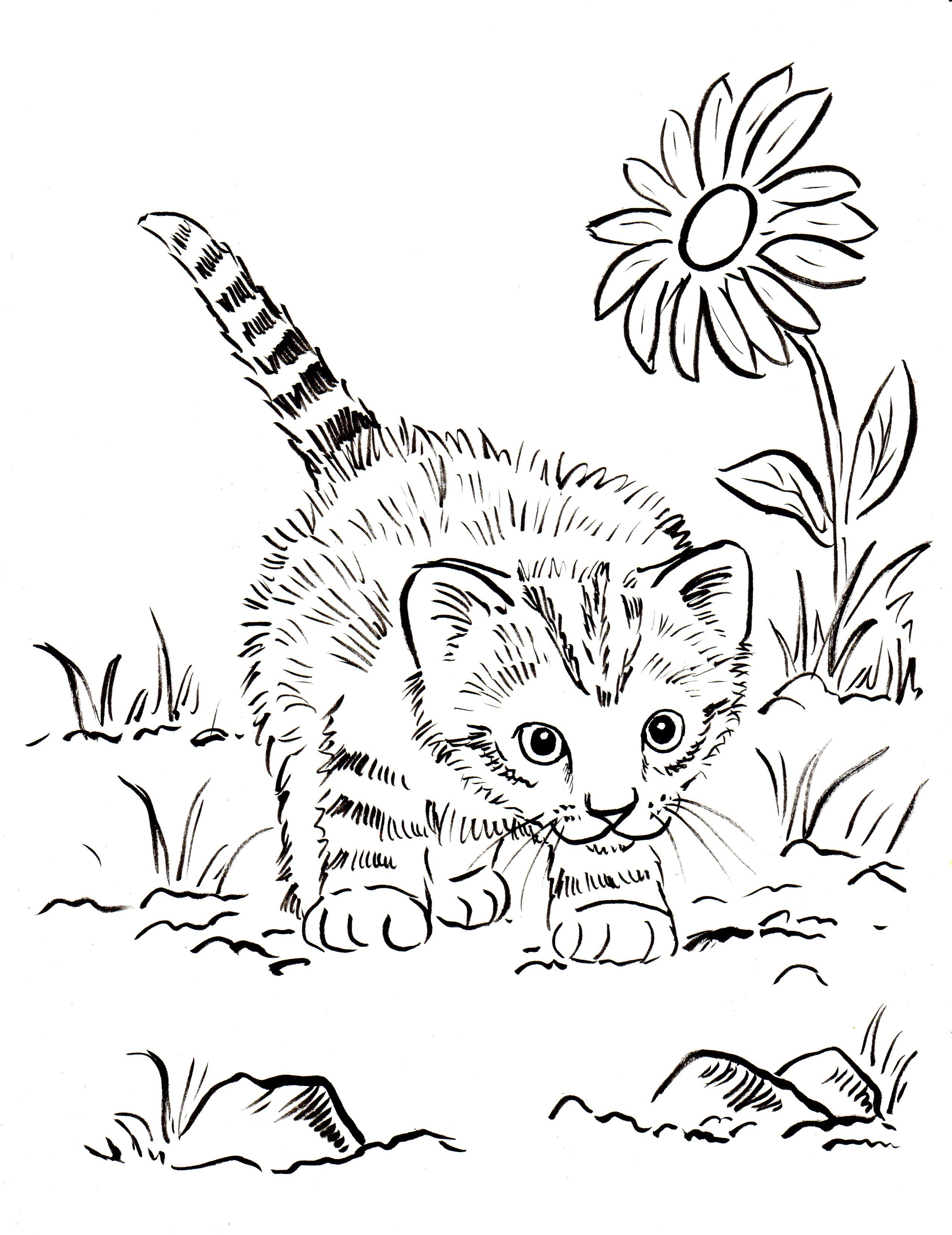 blank kitten coloring book pages - photo#30