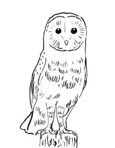 Coloring Page 2 Owl 001