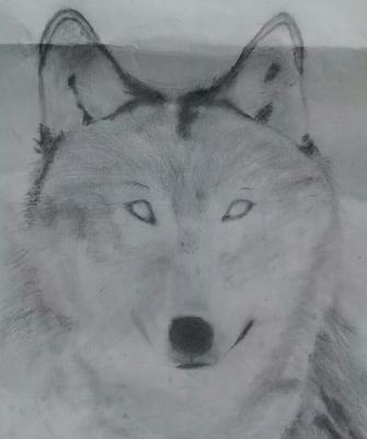 glaring-wolf