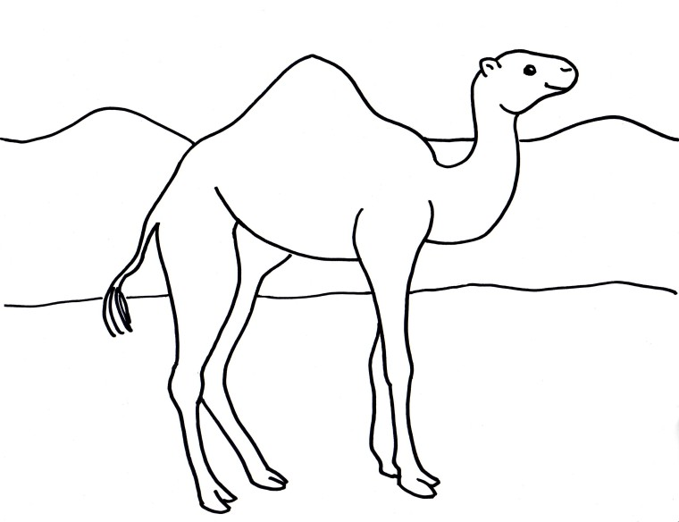 Camel Coloring Page - Samantha Bell