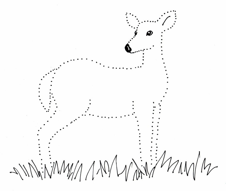 Deer Dot Drawing Samantha Bell