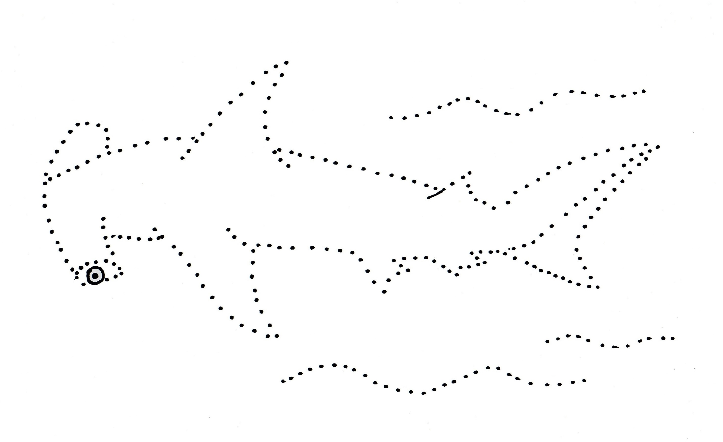 Hammerhead Shark Dot Drawing - Samantha Bell
