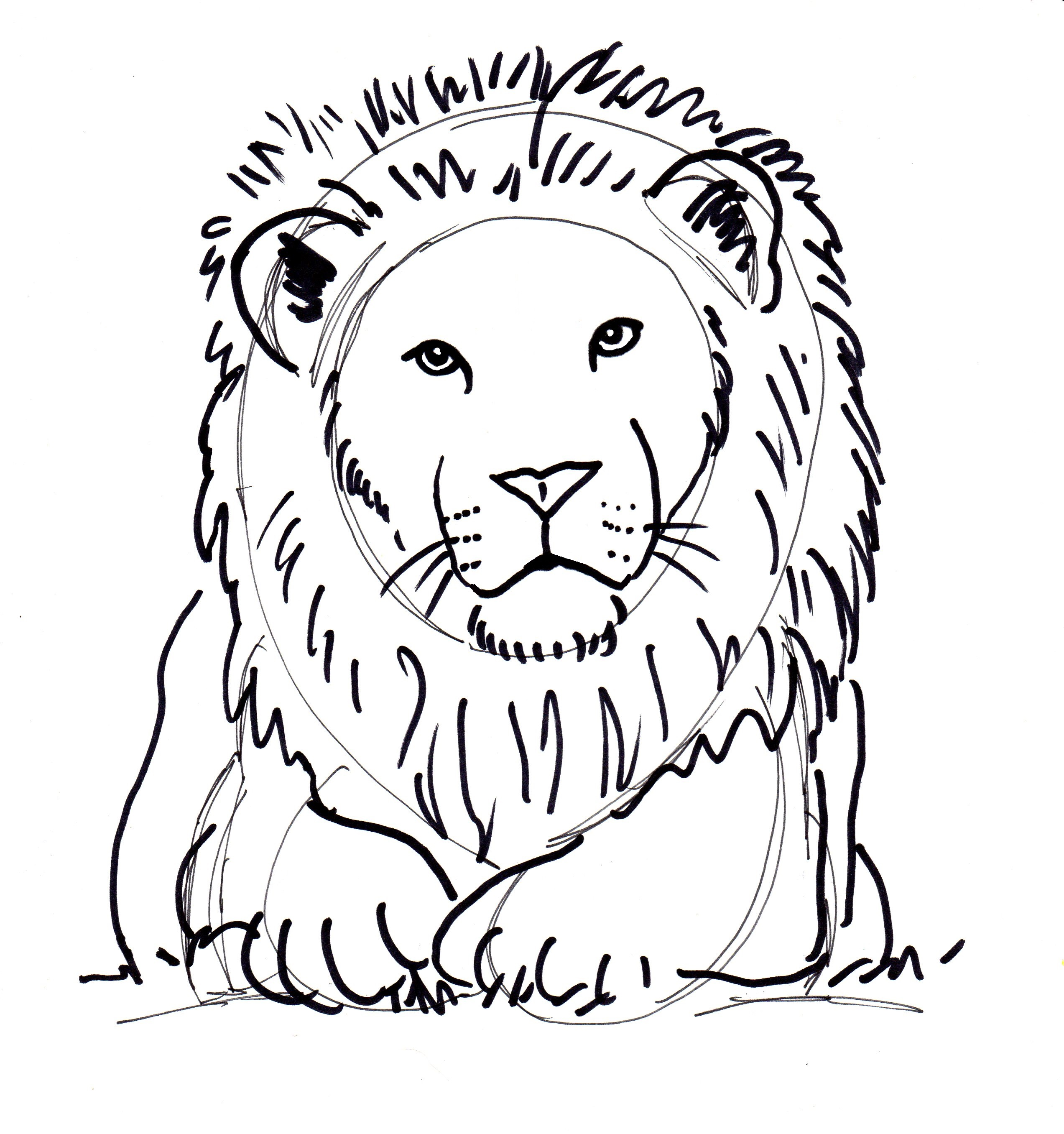 Line Drawing Lion Head : Drawing with shapes and lines samantha bell