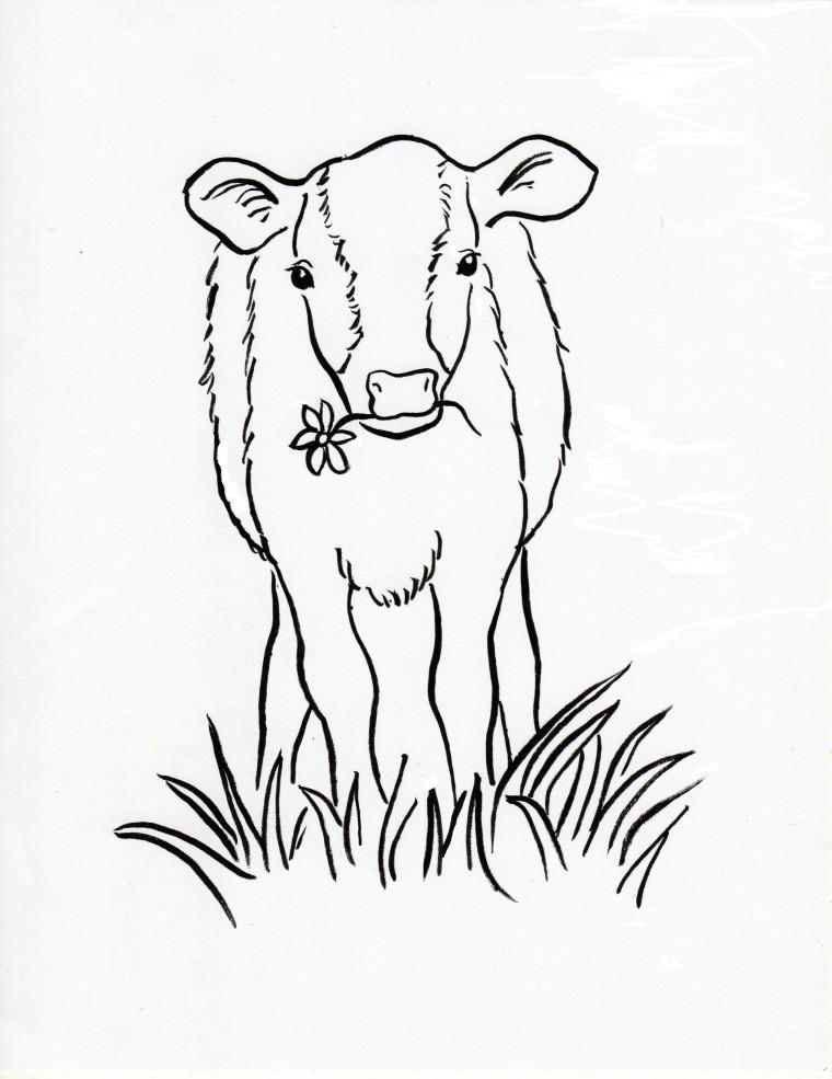 Calf Coloring Page - Samantha Bell