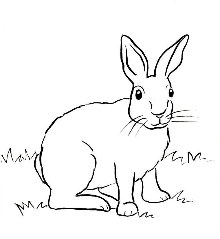 Cottontail Rabbit Coloring Page - Samantha Bell