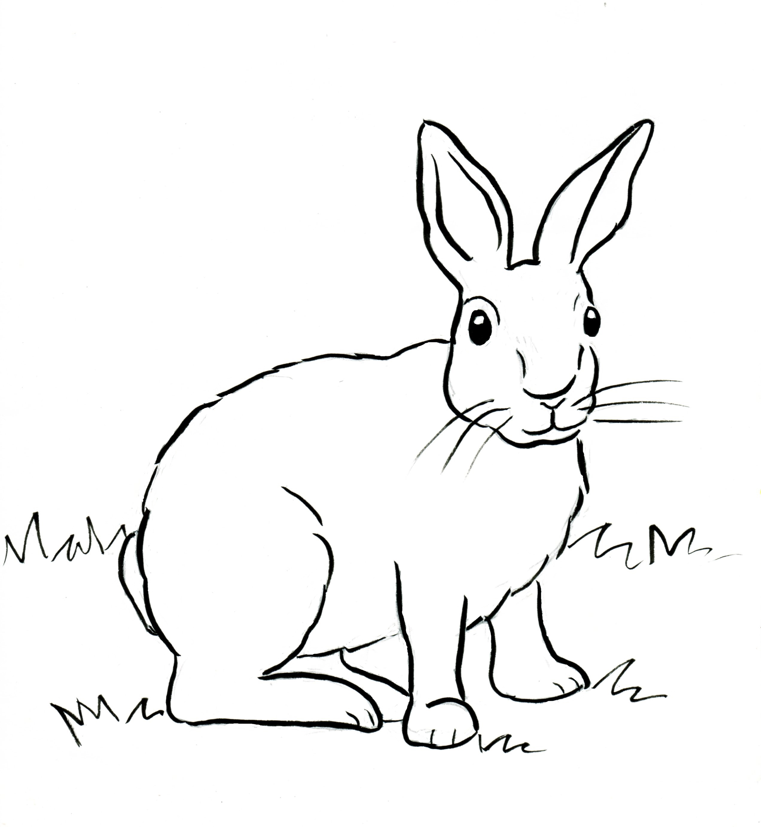 cottontail rabbit coloring page samantha bell - Rabbit Coloring Pages