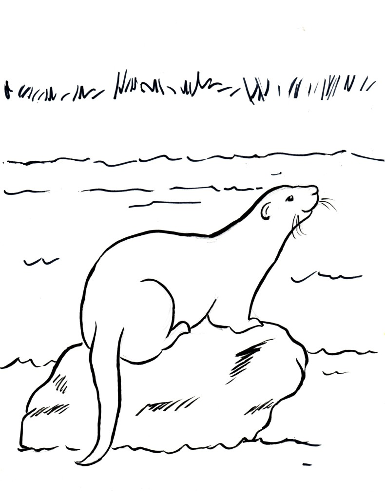 River Otter Coloring Page - Samantha Bell
