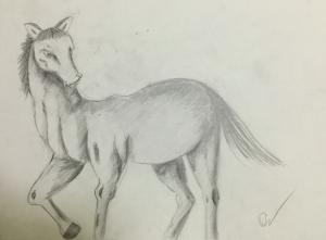 sketch elegant horse IMG_5435