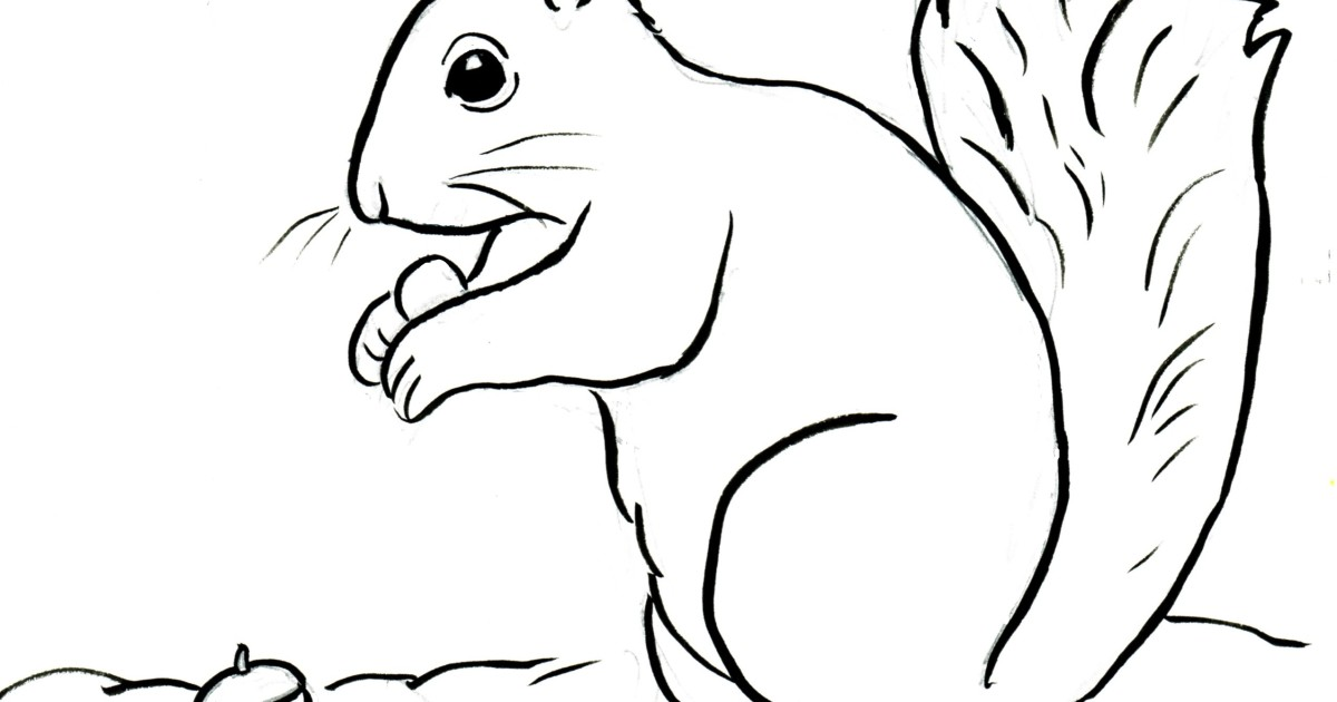 Squirrel coloring page samantha bell for Squirrel coloring pages free