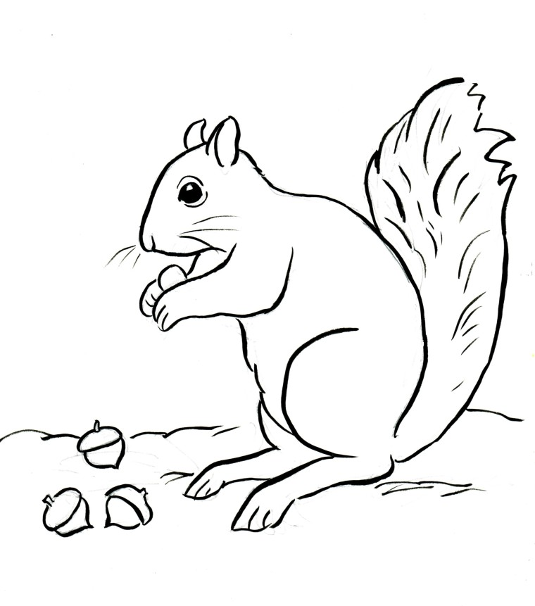 Squirrel Coloring Page - Samantha Bell