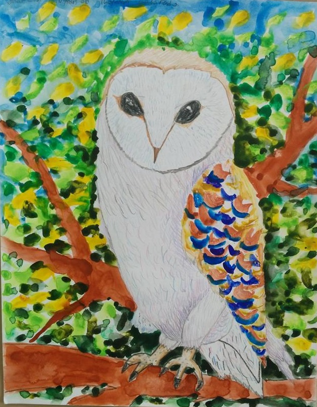 International Owl Coloring Contest (International) - Samantha Bell