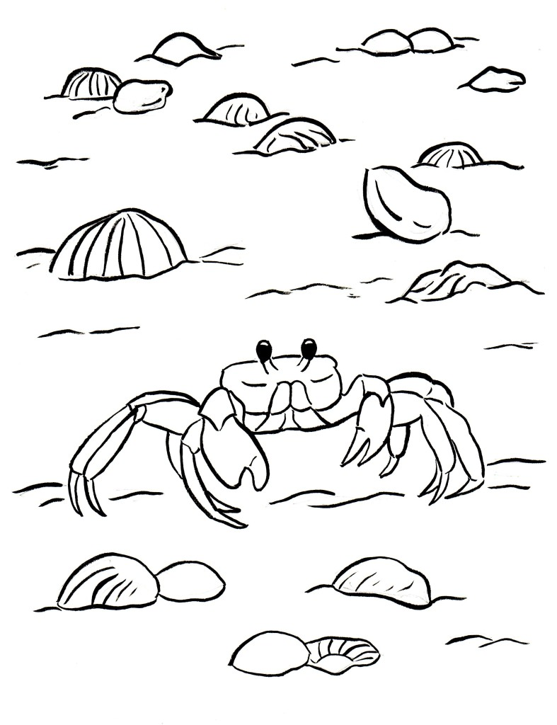 Ghost Crab Coloring Page - Samantha Bell