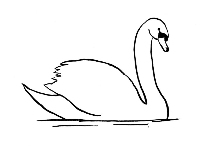 swan drawing step by step