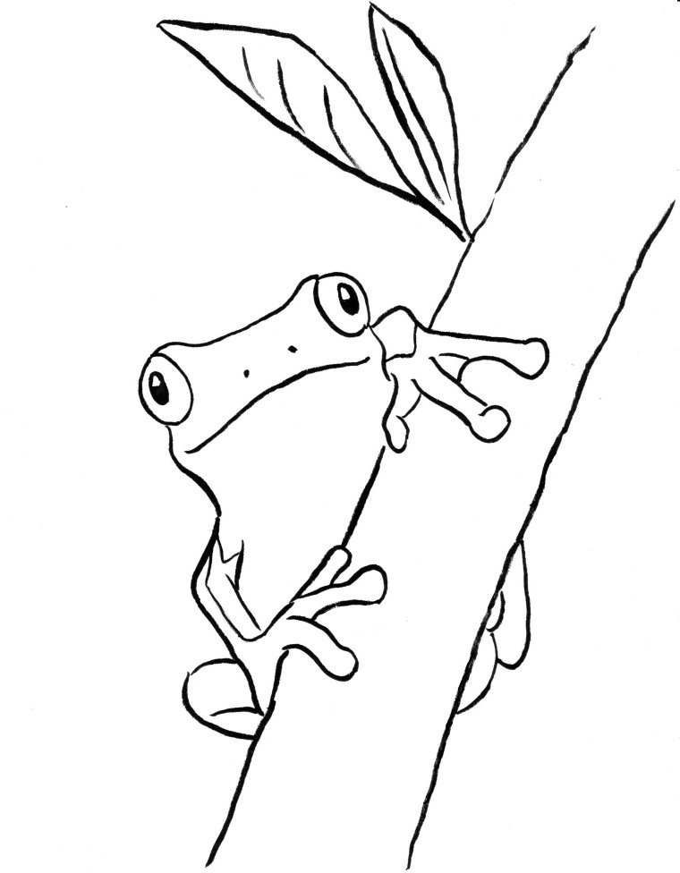 Tree frog coloring page samantha bell for Free printable frog coloring pages