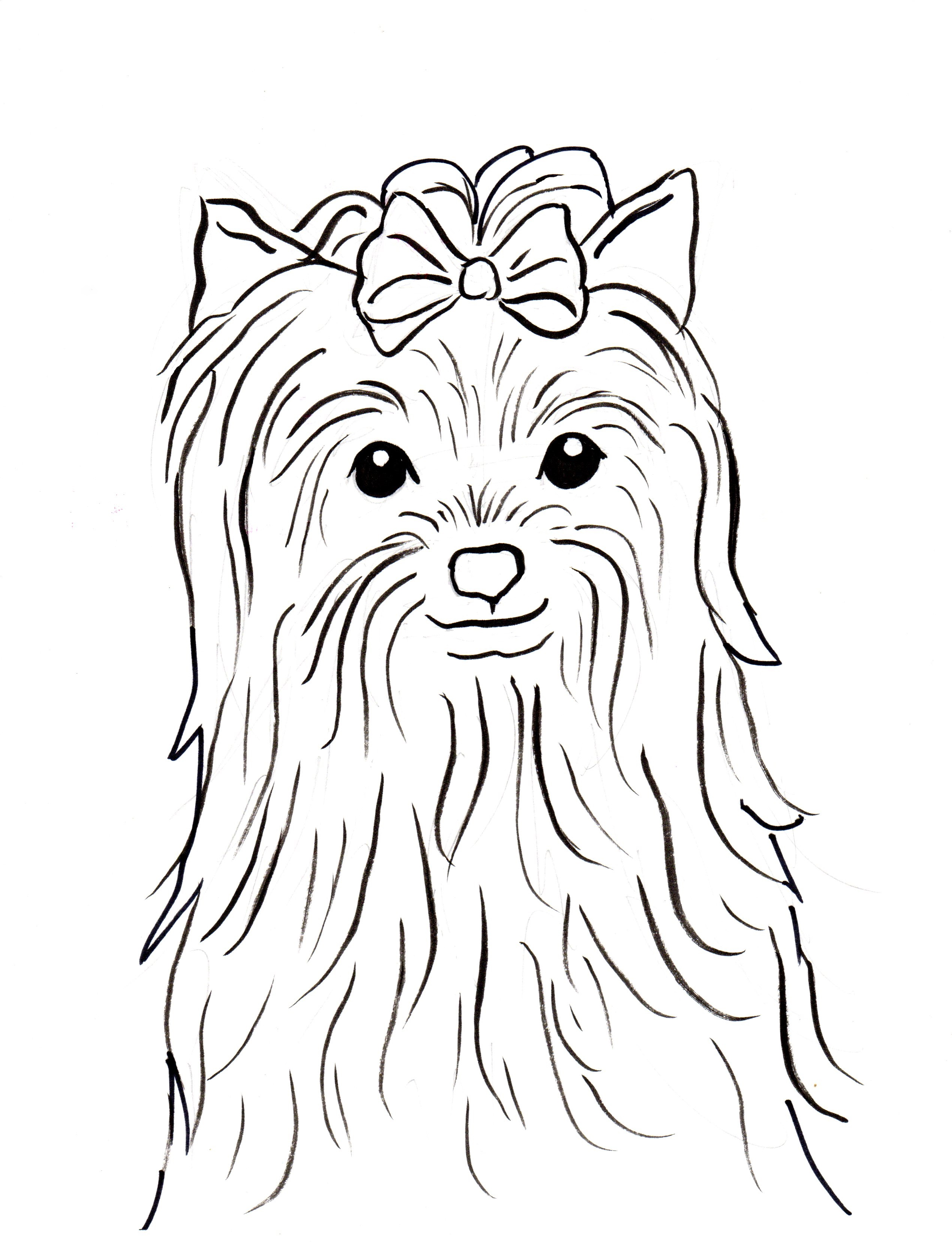 Line Drawing Of Yorkshire Terrier : Yorkshire terrier coloring page samantha bell