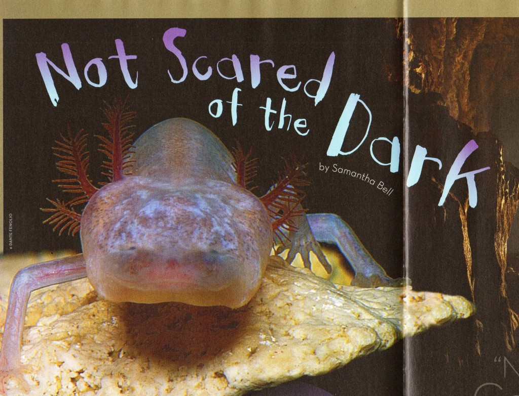 Clubhouse Jr Not scared of the dark (2)