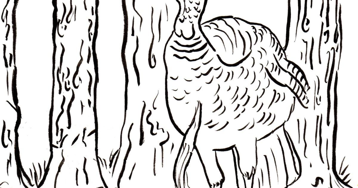 Wild Turkey Coloring Page - Art Starts for Kids